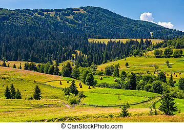 rural fields and forested hills of Carpathians. lovely...