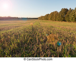 Rural fields in autumn with forests in the background Sunset