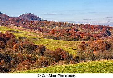 rural fields on hills in autumn
