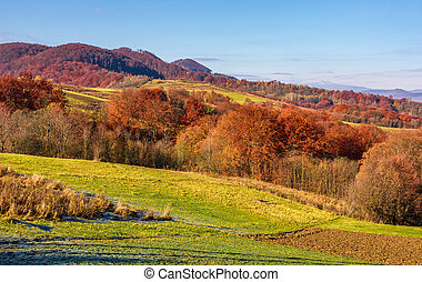 rural fields on hills in autumn. beautiful mountainous...