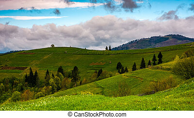 rural fields on hills on cloudy day - grassy rural fields...