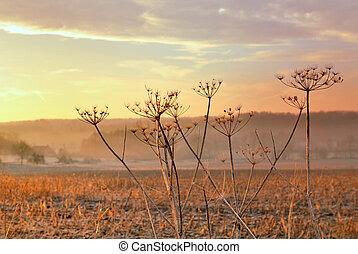 rural flower at sunset