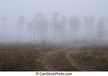 Rural Foggy Landscape in the Fall