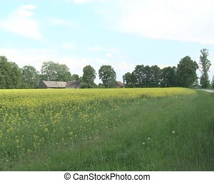 rural house agriculture - Rural house near blossom rapeseed...