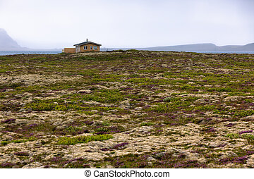 Rural House at Blooming Moss Field in Iceland