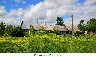Rural house surrounded by tall grass in summer. Russia