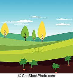 Rural landscape, agriculture field with carrots vector Illustration