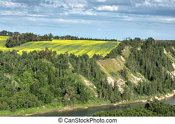 Rural landscape, Alberta