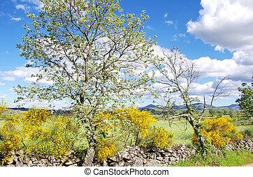 rural landscape ,alentejo region, Portugal