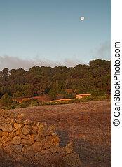 Rural landscape at dawn.