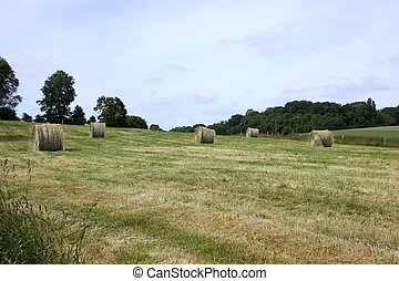rural landscape, bales of hay in a field in spring
