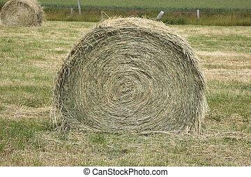rural landscape, bales of hay in a field in spring