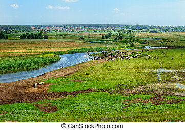 Rural landscape - Beautiful rural scene with grazing cows in...