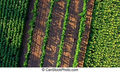 Rural landscape from air - Aerial rural landscape from...
