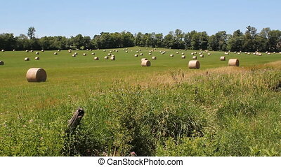 Rural landscape. Hayfield. - Bales of hay in a field. Rural...