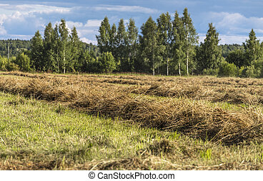 dried grass in the foreground