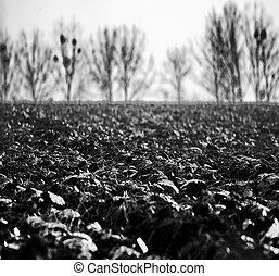Rural landscape in Poland