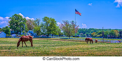 Rural landscape of a Maryland horse stable wih an American flag flying