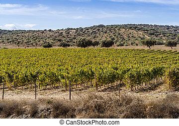 Rural landscape of Alentejo with vineyards, Portugal