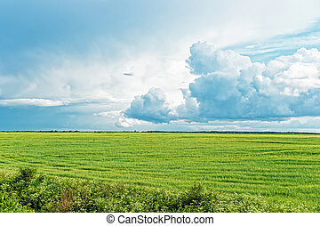 Rural landscape of field and dramatic clouds - Rural...
