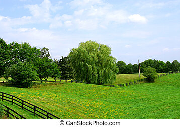 Rural landscape of lush green fields and trees