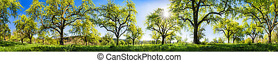 Rural landscape on a glorious sunny spring day
