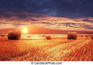 Rural landscape. Sundown on farm field.