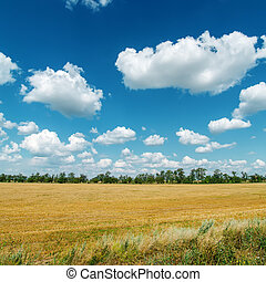 rural landscape under cloudy sky