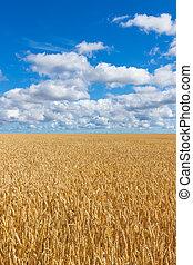 Rural landscape, wheat field under blue sky