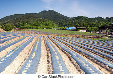 Rural landscape with a field in South Korea