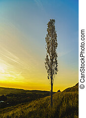 Rural landscape with a poplar on a hill