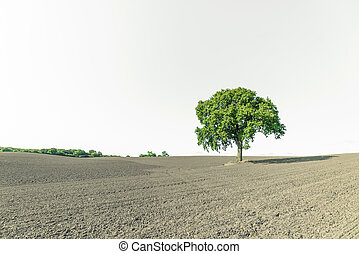 Rural landscape with a single green tree