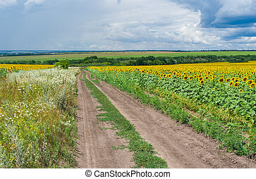 Rural landscape with earth road among agricultural fields at summer season.