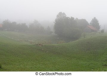 Rural landscape with fog in the morning