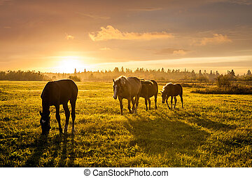 Rural landscape with grazing horses on pasture at sunset
