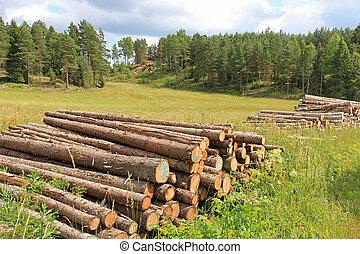 Rural Landscape with Log Piles at Summer