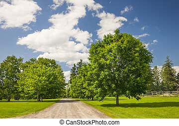 Rural landscape with maple trees