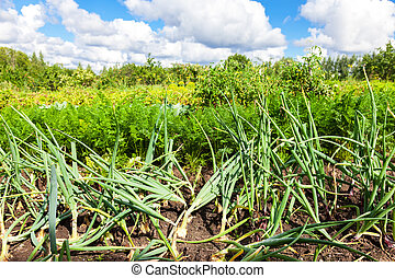 Rural landscape with organic vegetable garden in summer sunny day