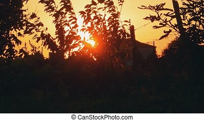 Rural Landscape With Setting Sun And Tree Branches Moving By...
