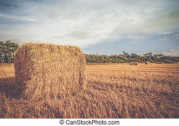 Rural landscape with straw bales