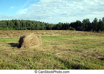 Rural landscape with summer field with many rolled haystack close-up on front and mowed field on the back on sunny day