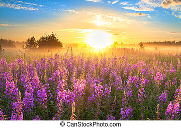 landscape with the sunrise  and  blossoming meadow