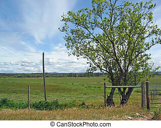 Rural landscape with tree and fence