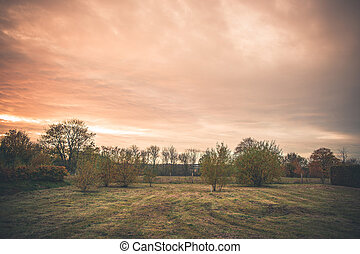 Rural landscape with trees on a lawn