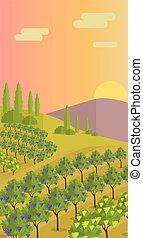Rural Landscape with Vineyard