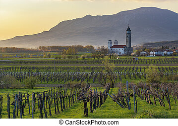 Rural landscape with vineyards and church in early spring....