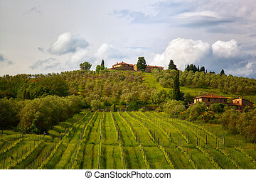 Rural landscape with vineyards in Tuscany, Italy
