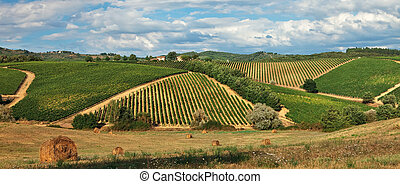 Rural landscape with vineyards on hills in Tuscany.