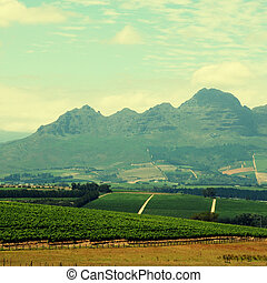 Rural landscape with vineyard(South Africa)