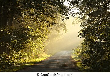 Picturesque scenery of the rural lane in the autumn woods on a foggy morning